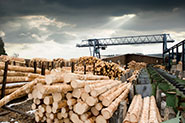 48959254_woodbanner